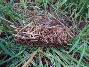 A custom gutter-downspout-shaped nest